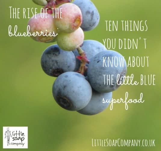 The rise of the blueberry  ten things you didn't know about the little blue superfood ~LittleSoapCompany.co.uk