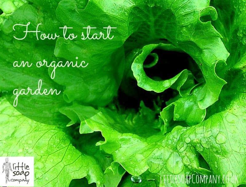 How to start an organic garden_ LittleSoapCompany.co.uk