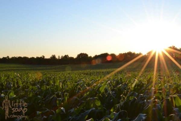 what is biodynamic farming_LittleSoapCompany.co.uk