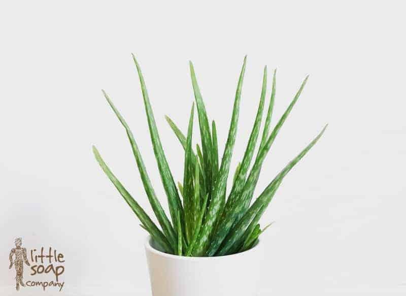 Three Little Natural Remedies for Sunburn_LittleSoapCompany.co.uk