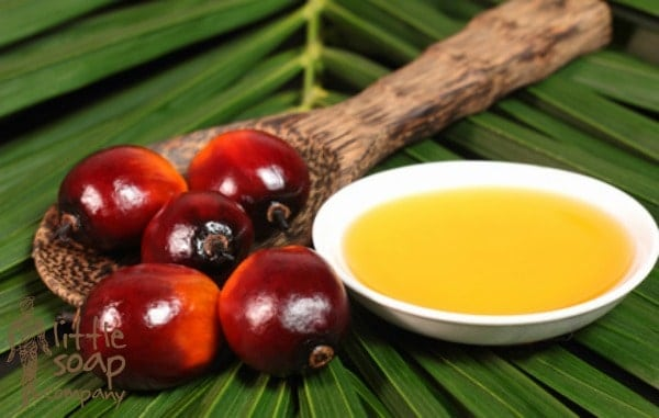 What you need to know about palm oil_LittleSoapCompany.co.uk