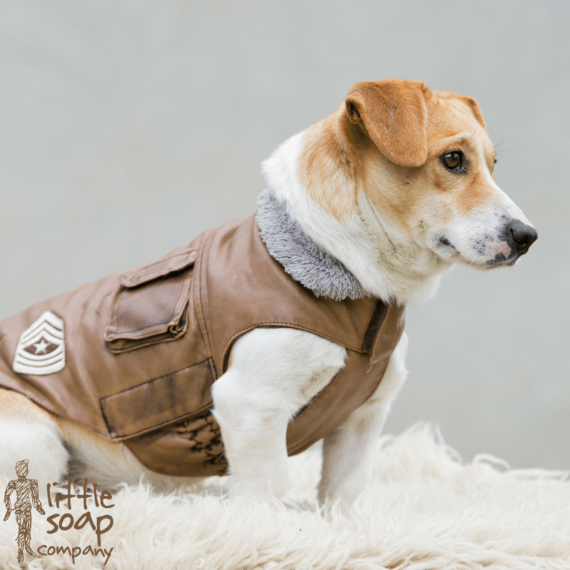 Five of the Best Dog Coats for Your Little Beast