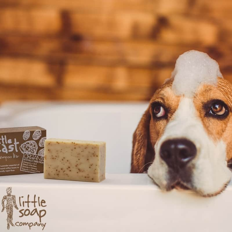 Five Little Health Tips for Dogs-LittleSoapCompany.co.uk