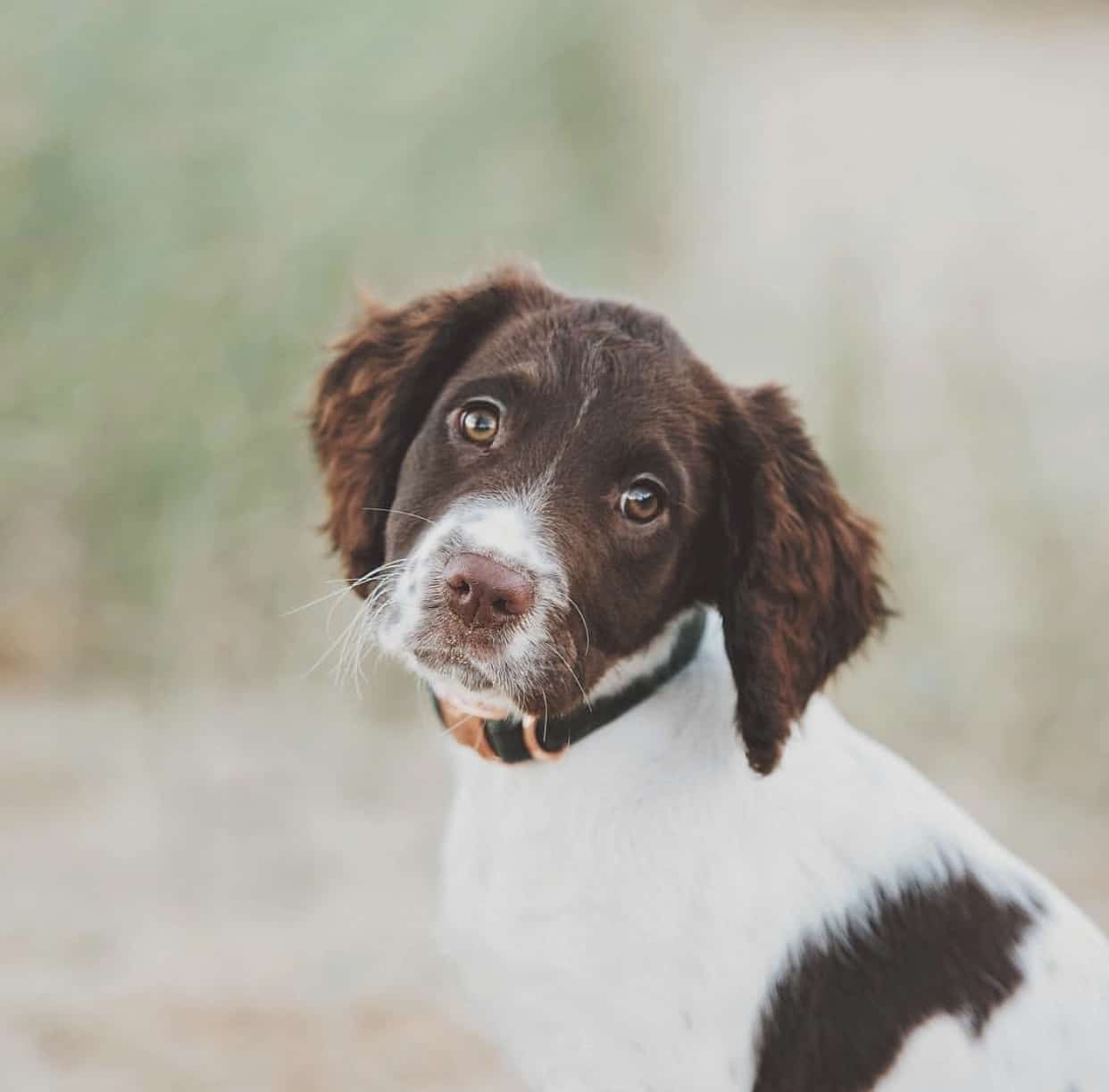 Three Top Dog Blogs You Need to Read_LittleSoapCompany.co.uk