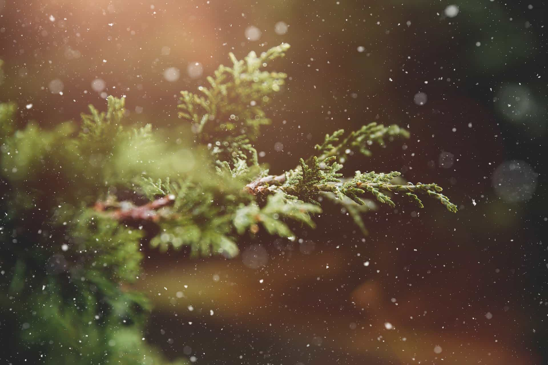 Three Tips to Reduce Waste at Christmas_LittleSoapCompany.co.uk
