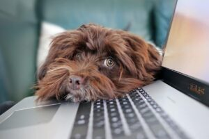 Top Three Dog Bloggers we Love in 2020-LIttleSoapCompany.co.uk