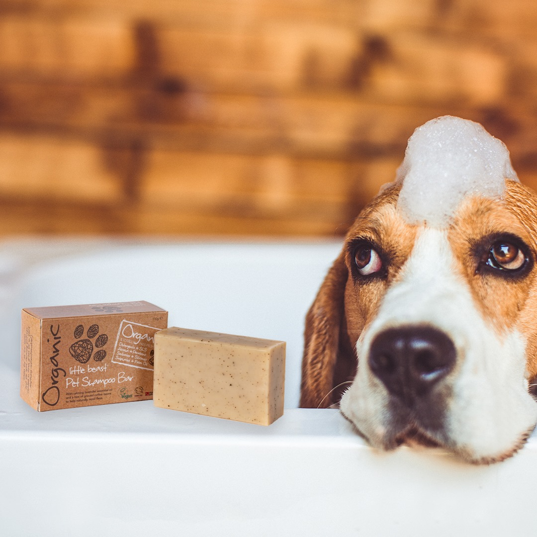 Three Little Dog Grooming Tips for Autumn