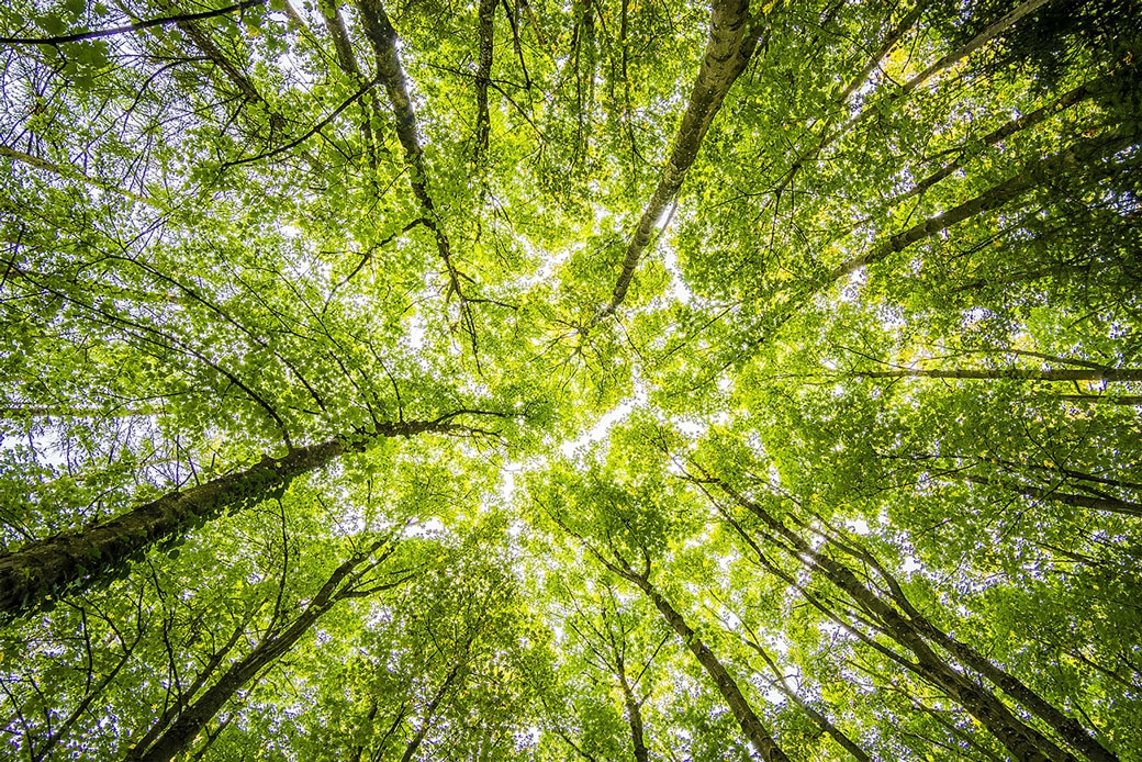 Three common eco-myths. Busted!